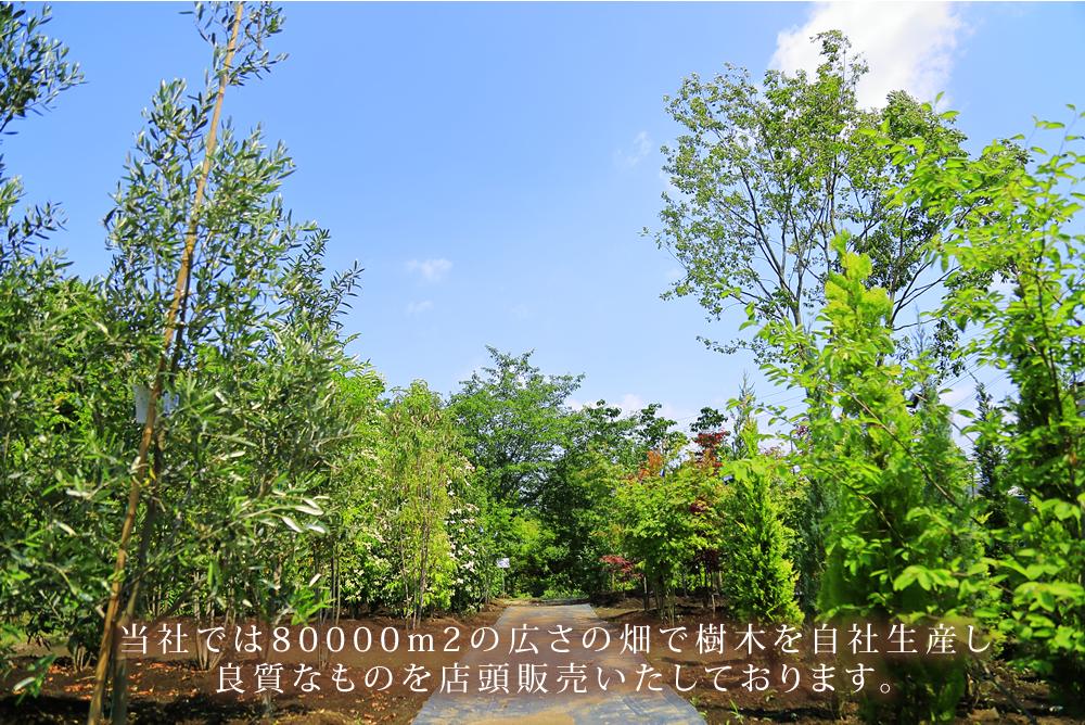 当社では80,000㎡の広さの畑で樹木を自社生産し良質なものを店頭販売いたします