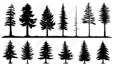 針葉樹と広葉樹について