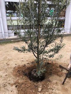 植木の植え方