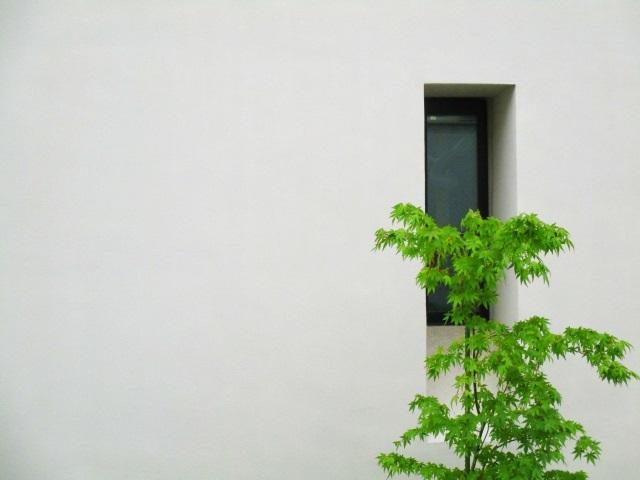【虫嫌い】で【お手入れ楽】なシンボルツリー3つのポイント