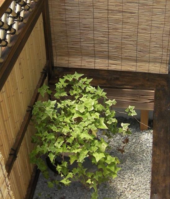 小さな和風のお庭・坪庭-小スペースでもできる、かわいい小庭