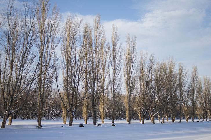 冬の季節⛄落葉後でも魅力的な樹木