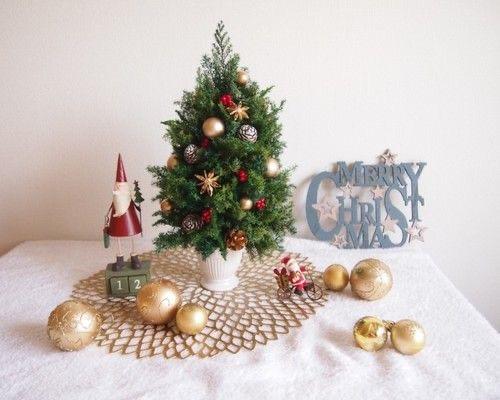 クリスマスを彩る植物