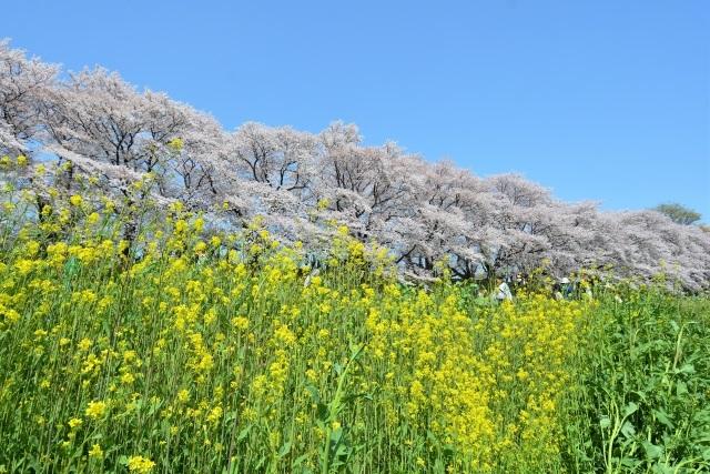 4月に咲く春の花!春ガーデニングの樹木たち!