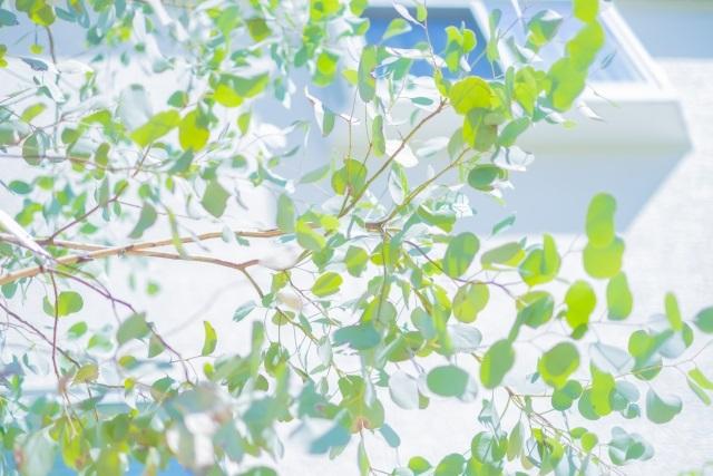 春!4月に植えるなら、おススメする植栽【3選】
