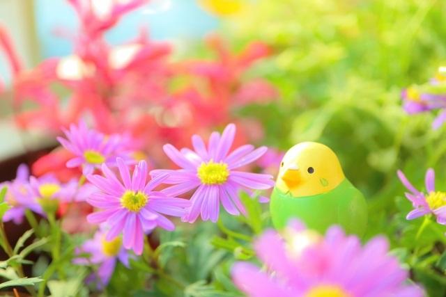 4月に咲く春の花!ガーデニングを彩るお花たち-1