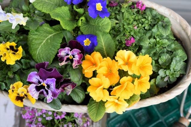 4月に咲く春の花!ガーデニングを彩るお花たち-2