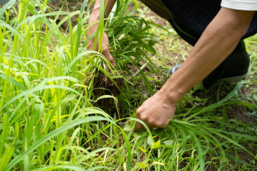 大がかりな工事不要!今スグ出来る効果的な雑草対策7選