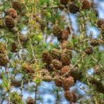 常緑樹と落葉樹について