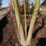 剪定するべき枝とは・実際に枝を切る際の注意点