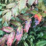 庭木の消毒と病害虫