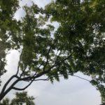夏も涼しく過ごせる雑木の庭