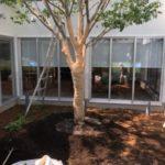庭木の移植時期 気を付けたいこと