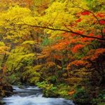 エクステリアで暮らしを充実に!山採りの木で自然味溢れるお庭にしてみませんか?