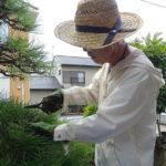 秋の樹木のお手入れ方法|剪定に適した時期はいつ?